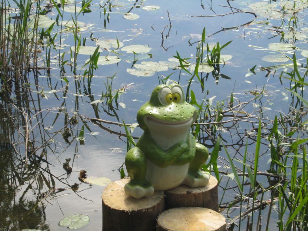 Лягушка на Раифском озере
