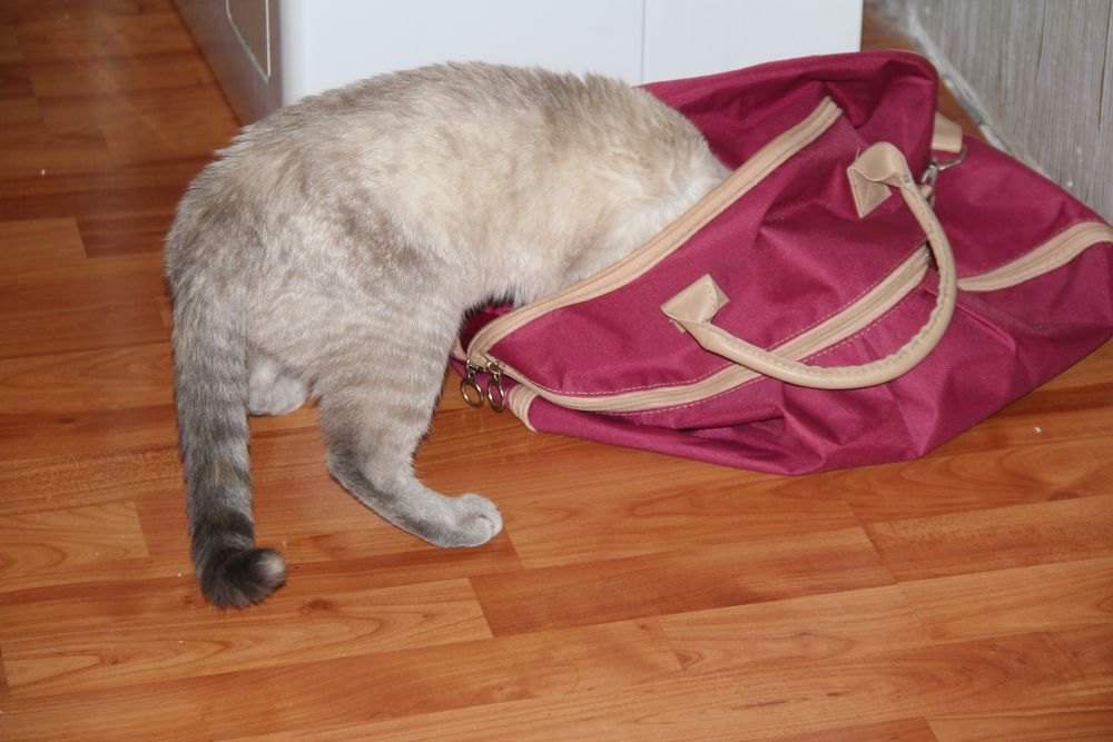 Василиса лезет в сумку за едой