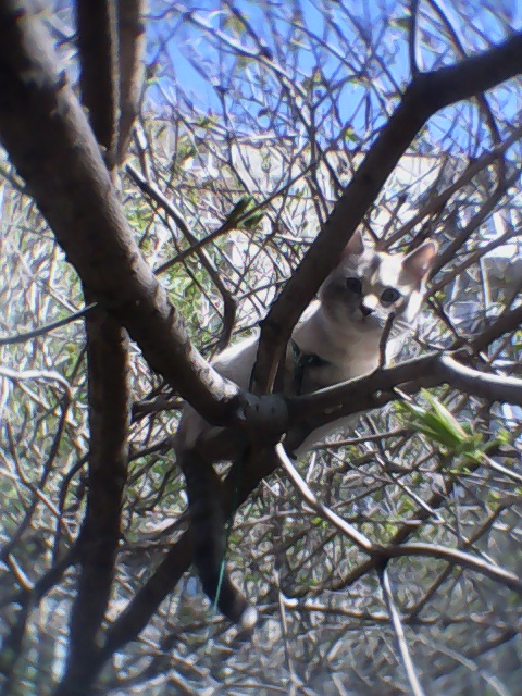 Вася сбежала от меня на дерево