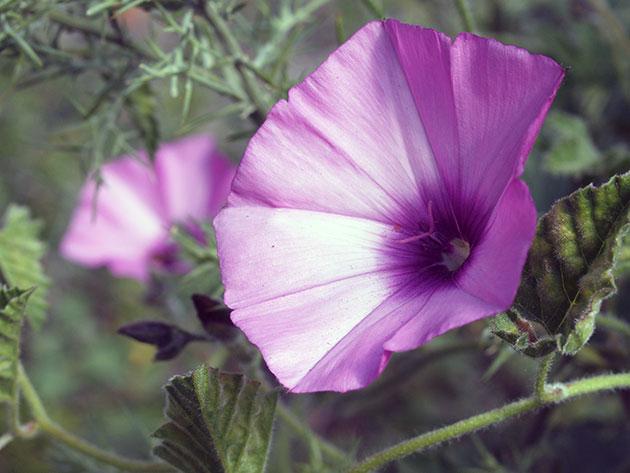 Цветы умеют разговаривать?